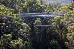 顶部结构树结构 库存图片