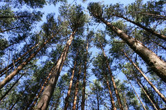 顶部结构树 库存图片