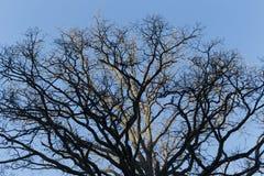 顶面树 库存图片