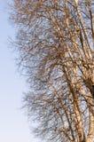 顶面老树枝在冬天没有叶子 库存图片