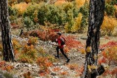 从顶面赛跑者的看法有跑足迹的北欧拐杖的在秋天森林里 免版税图库摄影