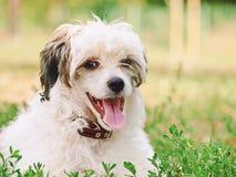 顶饰的狗汉语 免版税图库摄影