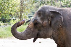 顶头大象 免版税库存图片