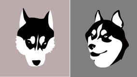 顶头插入的狗品种西伯利亚爱斯基摩人到m里 库存照片