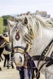 顶头白色的horseÂ的 免版税库存照片