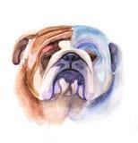顶头色的牛头犬的 免版税库存图片
