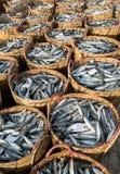 头顿,越南- 2016年7月03日:在竹篮子堆的鲜鱼在长的海氏捕鱼港口 免版税库存图片