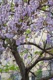 预定在树的吊与蓝色花法国,巴黎 库存照片