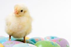 预警婴孩小鸡复活节 免版税库存图片
