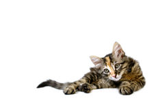 预警小猫 免版税库存图片