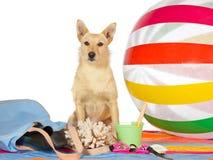 预警狗在海边 免版税图库摄影