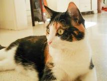 预警猫 免版税库存图片