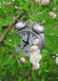 预警苹果开花的分行时钟结构树 库存图片