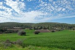 领域、小山和美丽的天空在犹太,以色列 库存图片