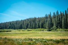 领域、尤塞米提谷的森林和草甸 加利福尼亚,美国 库存照片