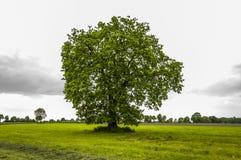领域、树和多云天空 免版税库存图片