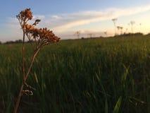 领域、花、焦点和太阳 免版税图库摄影