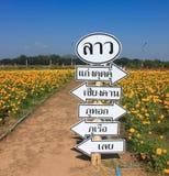 领域万寿菊的标志 库存照片