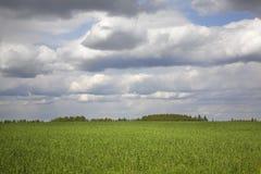 领域和云彩在Vakhonino 俄国 免版税图库摄影