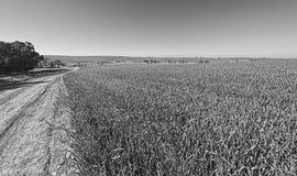 领域和农村弯曲的路在以色列 库存照片
