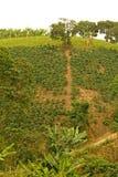 领域和咖啡种植园在哥伦比亚的安地斯 哥伦比亚 库存照片