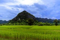 领域和小山。 免版税库存图片