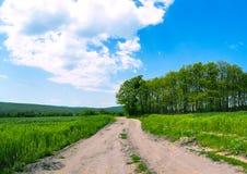 领域和小灌木林 库存照片