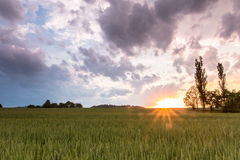 领域和日落在捷克 免版税库存图片