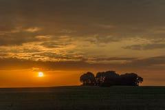 领域和日落的树丛与云彩 免版税库存照片