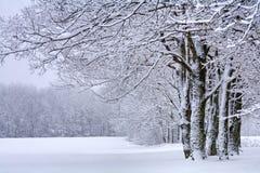 领域和树在雪 库存图片
