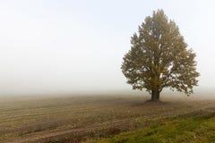 领域和树,雾 免版税库存图片
