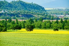 领域和树 免版税库存照片