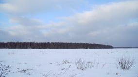 领域和森林冬天风景  股票视频