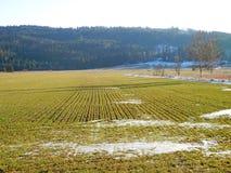 领域和森林在温和的冬天 库存照片