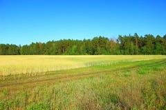 领域和森林风景 免版税库存照片