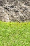 领域和植物领域垂直 免版税库存图片
