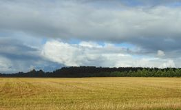 领域和美丽的多云天空 图库摄影