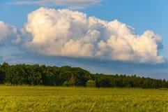领域和美丽的天空 图库摄影