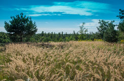 领域和草甸在收获期间 库存图片