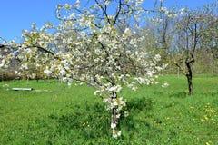 领域和草甸白云岩山的,在春天 库存图片