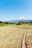 稻领域土坎 图库摄影