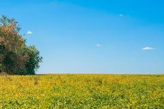领域在乌克兰 秋天日出 图库摄影