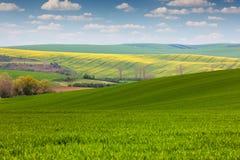 领域在乡下,春天风景的不同的颜色 免版税库存图片