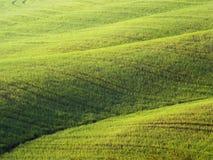 领域在意大利-托斯卡纳在春天 库存照片