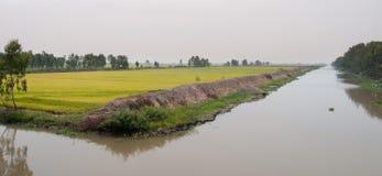 水稻领域在越南南方 免版税库存图片