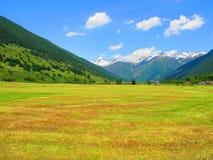 领域夏令时在瑞士阿尔卑斯 库存照片