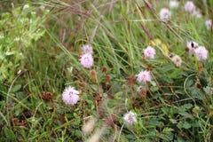 领域大草原在春天开了花 免版税库存图片