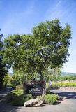 领域尚东酿酒厂在纳帕谷 免版税库存照片
