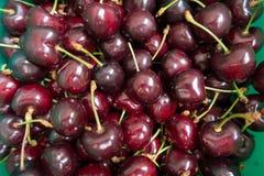 领域新鲜的成熟有机甜樱桃果子 免版税库存照片