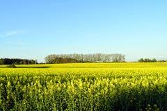 领域有开花的黄色 库存照片